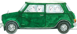 westies in car
