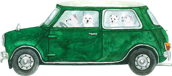 westies in car